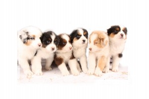 puppies_bowie_week5-1