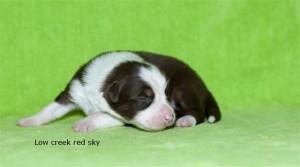 red sky week 1